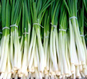 onion farming 2021 - कांदा पिकाची लागवड व व्यवस्थापन