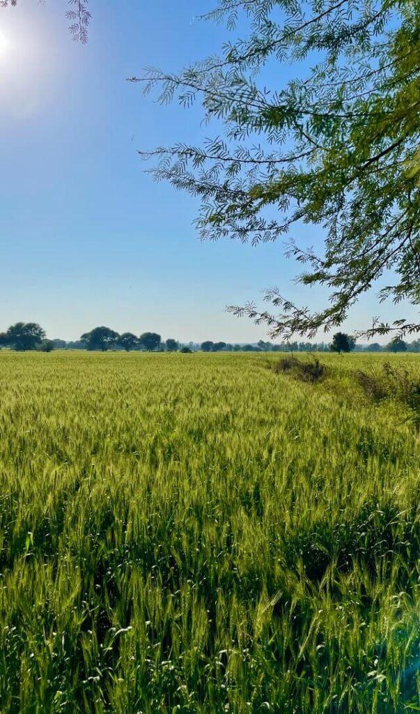 shetkari nuksan bharpai maharashtra 2020 - आज शेतकऱ्यांच्या खात्यात पैसे जमा होणार.