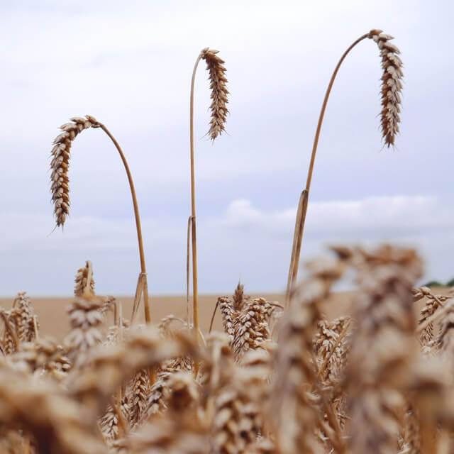 Maharashtra Shetkari Yojana शेतकऱ्यांना घेता येणार एकाच योजनेतून 90 योजनांचा लाभ