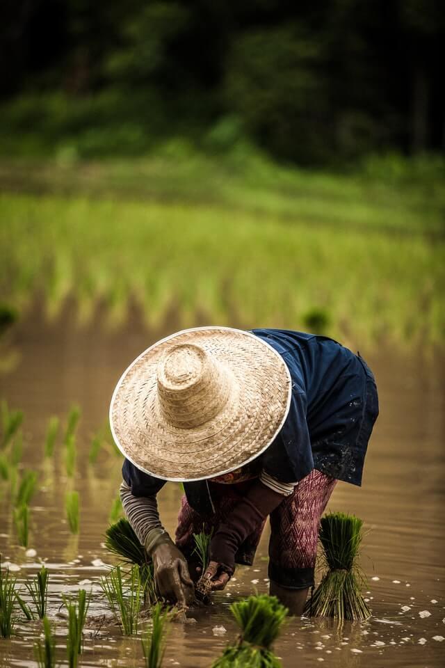 krushi Anudan Yojna - शेतकऱ्यांना मिळणार आता 50% अनुदानावर फवारणी औषधे.