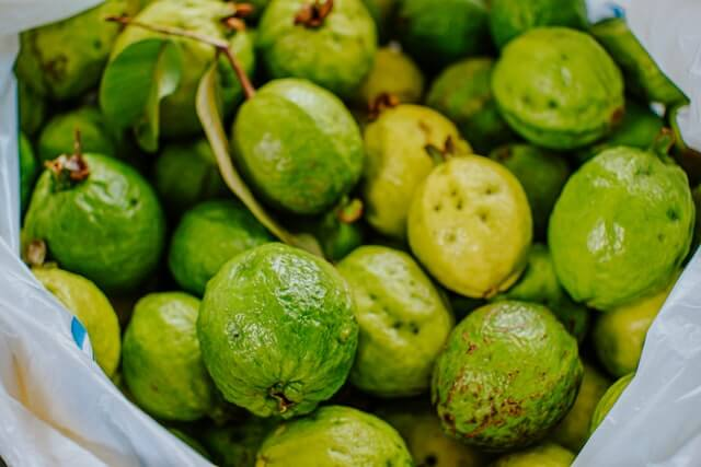 पेरू लागवड तंत्रज्ञान Guava Farming in Marathi 2021