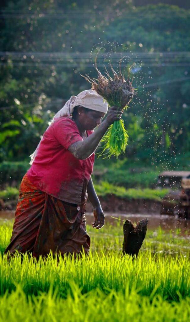 Krishi Vibhag Yojana - एकाच नंबर वरती मिळवा आता शेती योजनांची माहिती 2020